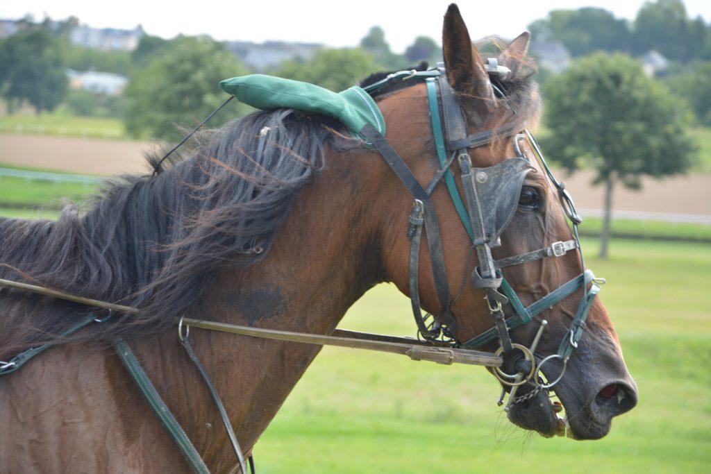 Entä jos hevonen huutaisi kivusta?